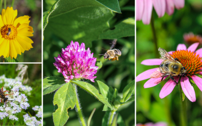 National Pollinator Week – All About Bees
