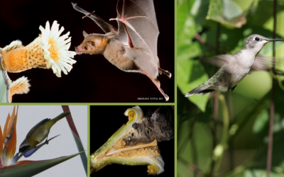 National Pollinator Week – Birds & Bats