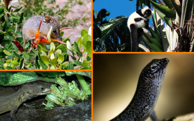 National Pollinator Week – Mammals & Reptiles