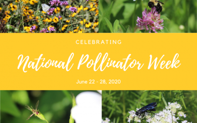 National Pollinator Week – Pollinators & Pollination