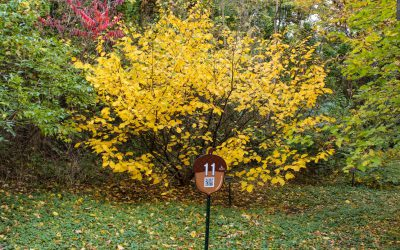 Self-Guided Fall Color Tour